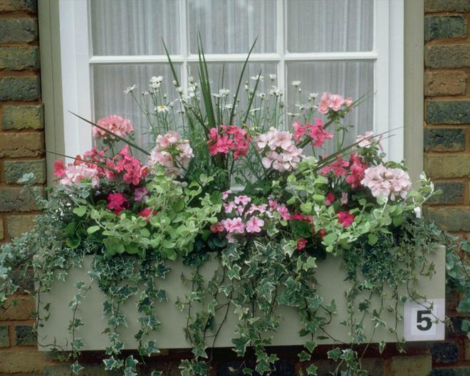 Small box flower garden under window