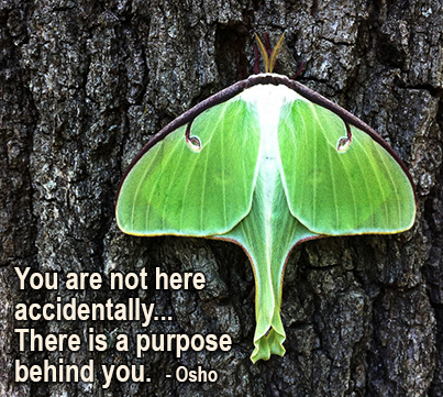 You are not here accidentally, there is a purpose behind you